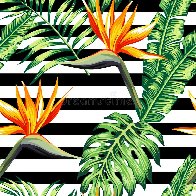 Tropical floral seamless background. Exotic tropic plants composed of palm banana leaves, paradise Strelitzia flower on black and white stripe geometric stock illustration
