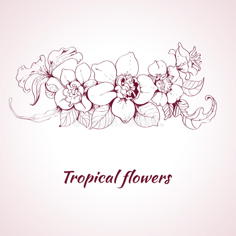 Download Tropical flower sketch stock vector. Illustration of pink - 39503296