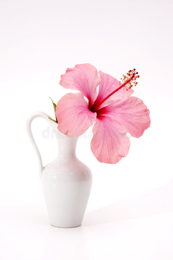 Download Tropical Flower In A Vase Stock Photos - Image: 3235443