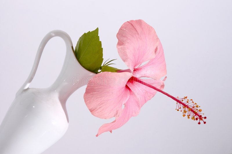 Tropical flower in a vase royalty free stock photography