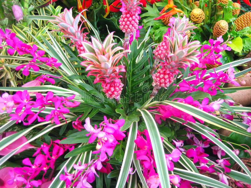 Download Tropical flowers stock photo. Image of colorful, closeup - 6458286