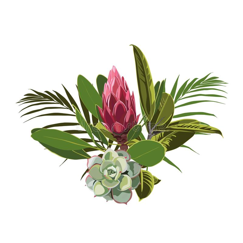 Tropical flowers, palm leaves, jungle leaf, succulent and protea flower. Vector exotic illustrations, floral elements isolated, Hawaiian bouquet for greeting stock illustration