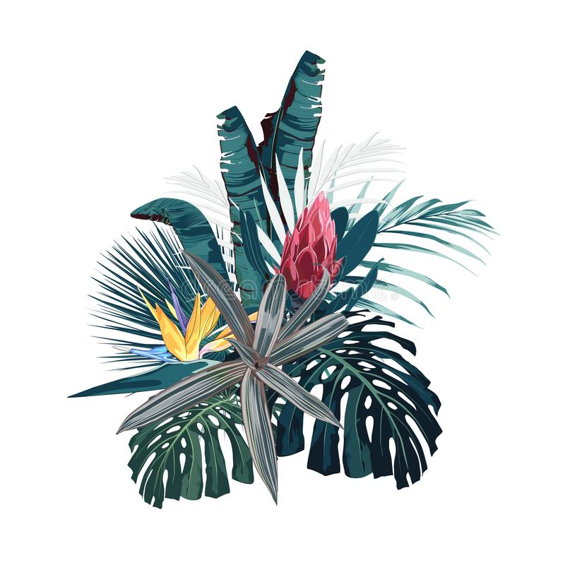 Tropical flowers, palm monstera leaves, hibiscus and protea flower. Tropical flowers, palm monster and bananas leaves, hibiscus and protea flower. Vector exotic royalty free illustration