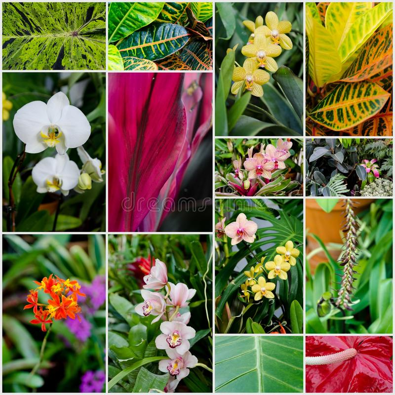 Download Tropical Flowers And Plants Stock Images - Image: 29079644