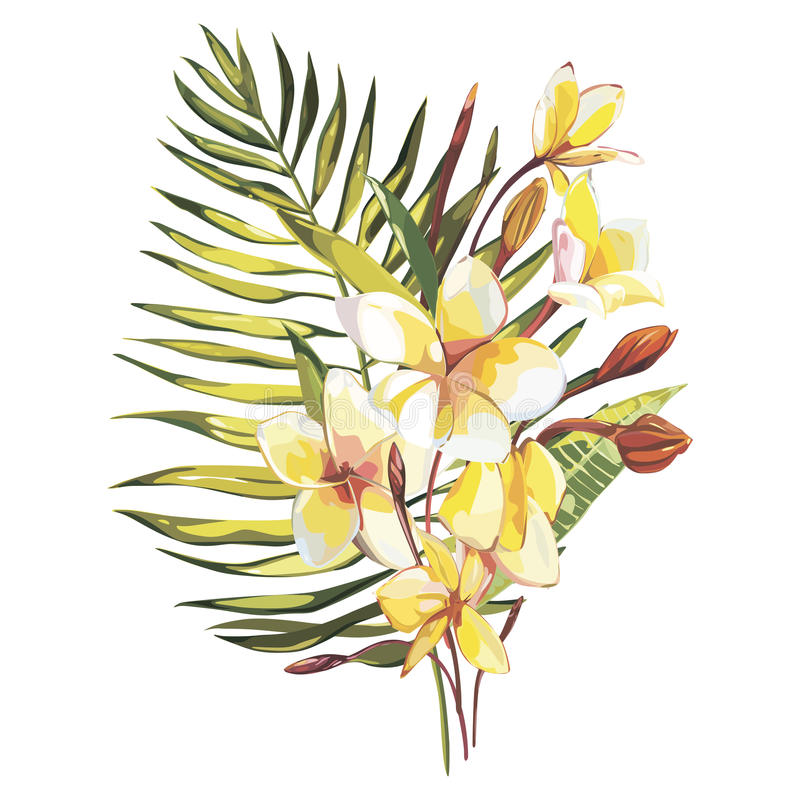 Tropical flowers plumeria whis leaf on white background. EPS 10 vector illustration