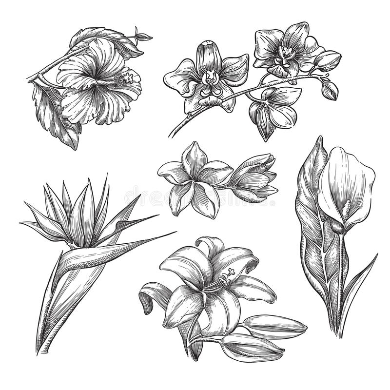 Tropical flowers set, vector sketch illustration. Hand drawn tropic nature and floral design elements. Hibiscus, plumeria, lily, calla, orchid isolated on