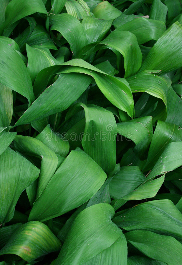 Tropical foliage stock images