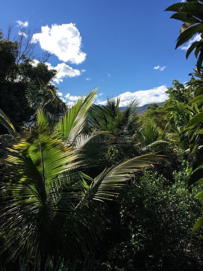 Tropical Foliage in Yunguilla Valley, Ecuador stock photo
