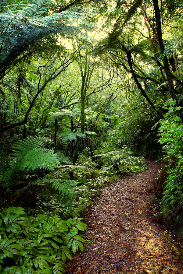 Download Tropical forest stock image. Image of lush, jungle, nobody - 16301727
