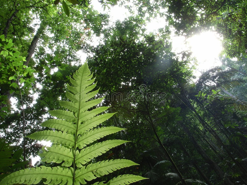 Tropical forest. Beautiful tropical forest with morning sunshine royalty free stock photography