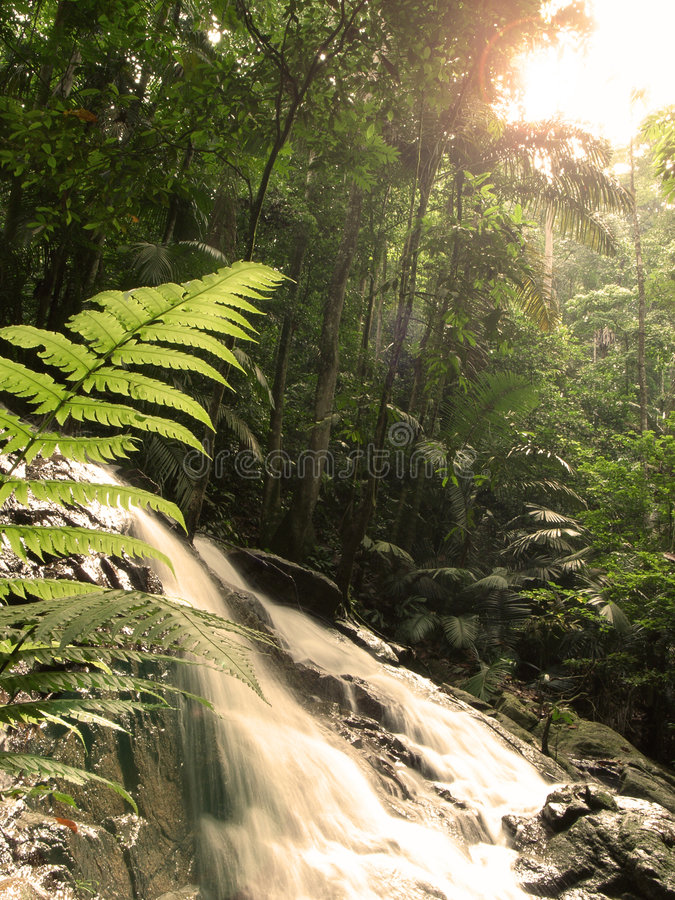 Tropical forest. Morning sunlight shine on tropical forest stock photography