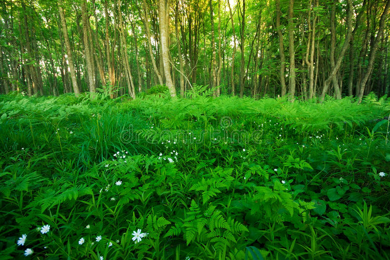 Download Tropical forest stock photo. Image of glade, border, fresh - 20061420