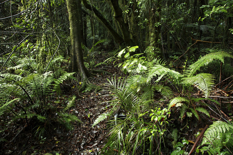 Download Tropical forest stock photo. Image of outdoors, dense - 2849322