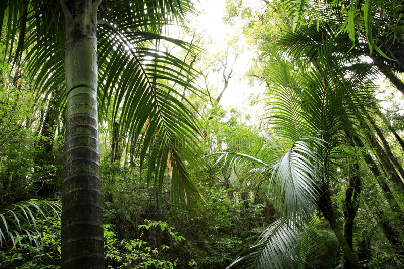 Tropical forest royalty free stock images