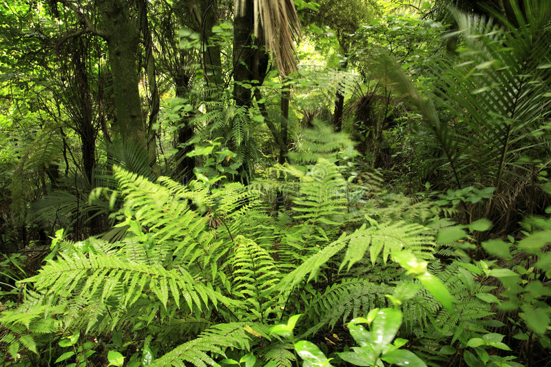 Tropical forest royalty free stock photos