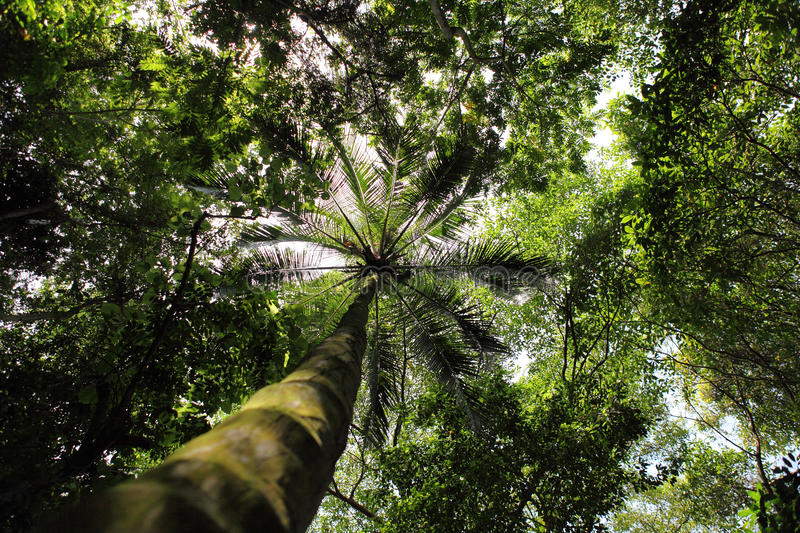 Tropical forest along the Caribbean Sea royalty free stock images