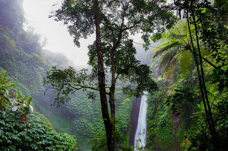 Tropical Forest Free Public Domain Cc0 Image
