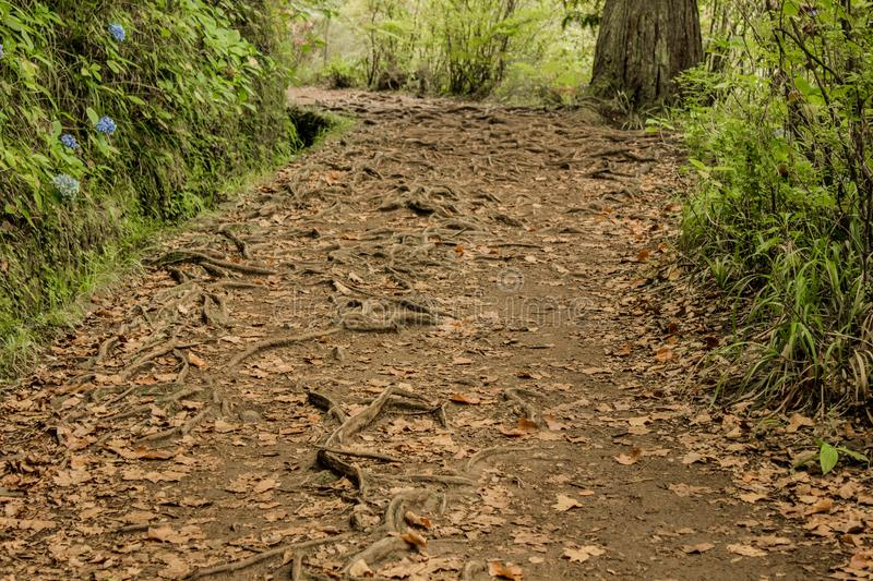 Irrigation canal levadas. Tropical forest in the mountains on Madeira island. Tropical forest in the mountains on Madeira island . Portugal stock image