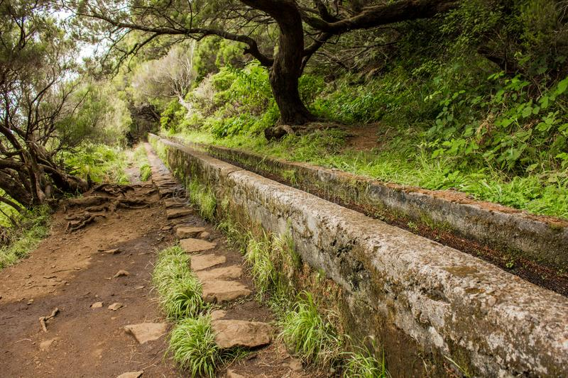 Irrigation canal levadas. Tropical forest in the mountains on Madeira island. Tropical forest in the mountains on Madeira island . Portugal royalty free stock photos