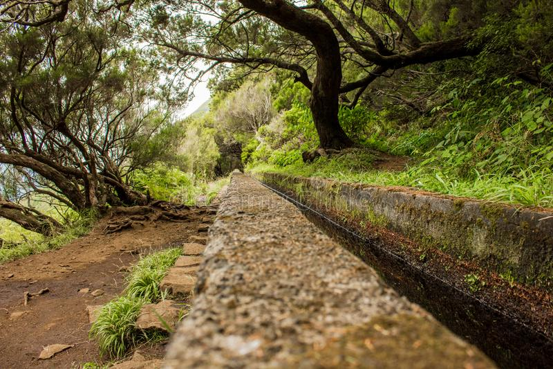 Irrigation canal levadas. Tropical forest in the mountains on Madeira island. Tropical forest in the mountains on Madeira island . Portugal royalty free stock image