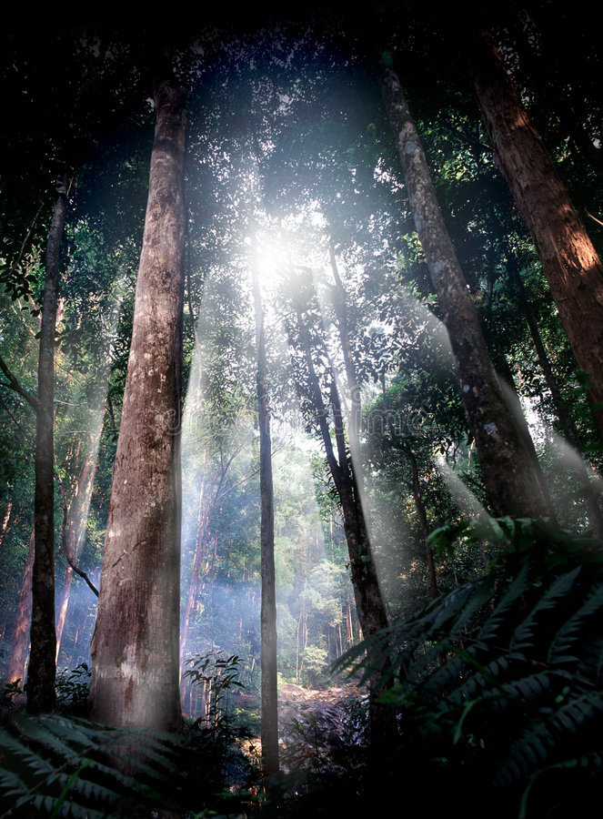 Tropical forest path. Beautiful scenic of tropical forest reserve stock image