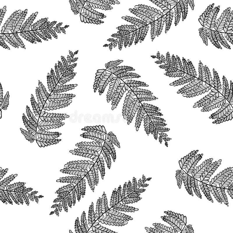 Tropical forest plant leaves seamless vector wrapping paper. Fern herbs. Modern herbal pattern. Bracken foliage, forest exotic leaves tropical fern grass herb royalty free illustration