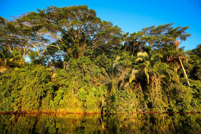 Tropical forest at Lake Sandoval in the Tambopata Park in Peru. Reflection of a tropical forest in the water of Lake Sandoval in the Tambopata Park in Peru stock photography