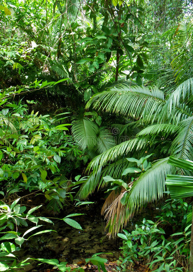 Tropical forest. With small canal stock photography