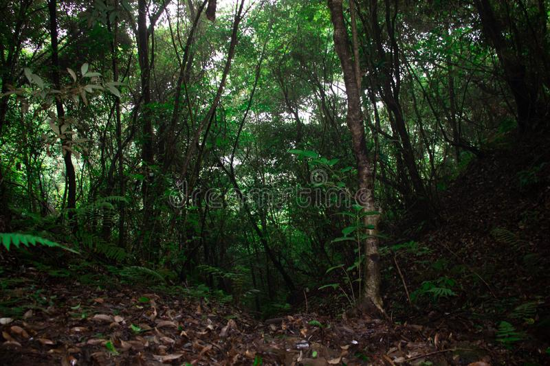 Tropical forest trees in rainy seasons. Trees in the tropical er forest during rainy seasons with lots of green stock photo