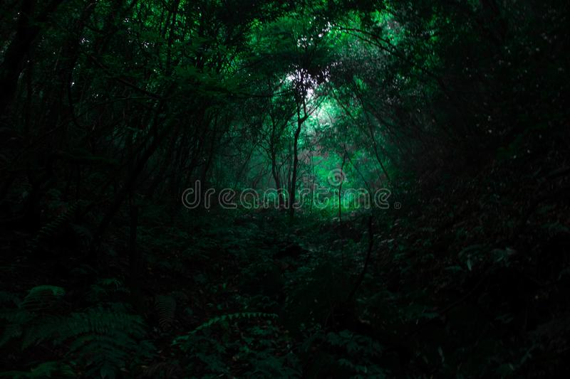 Tropical forest trees in rainy seasons. Trees in the tropical er forest during rainy seasons with lots of green stock images