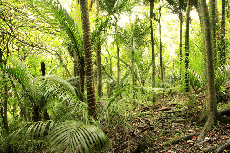 Tropical forest vegetation. Vegetation of tropical forest showing greenery stock photos
