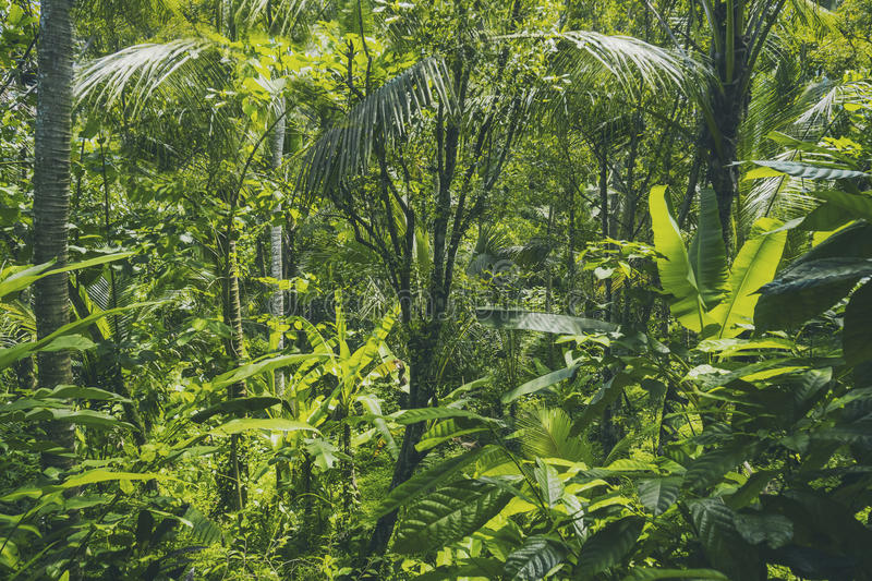 Tropical forest view in Asian country , green nature texture, jungle view background. Tropical forest view , green nature texture, jungle view background stock photography