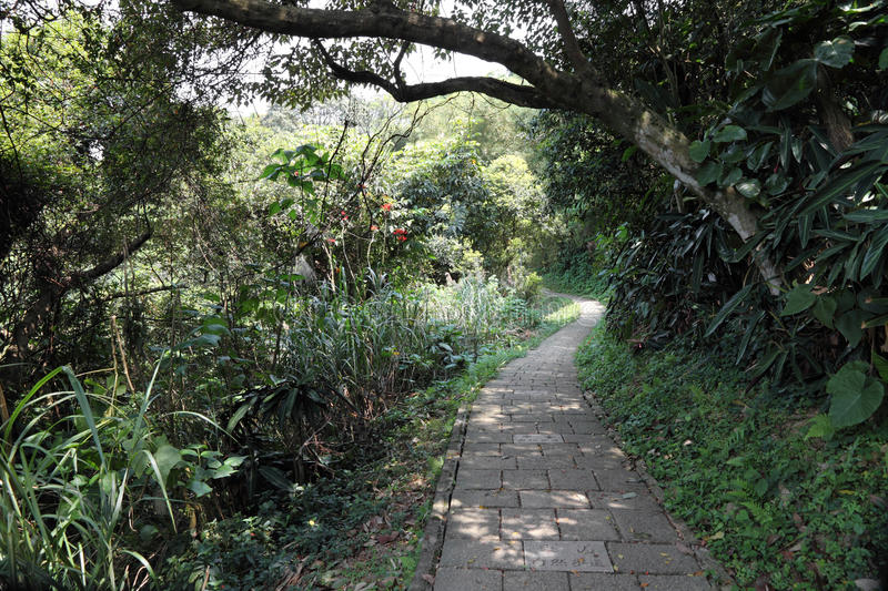 Tropical forest walkway