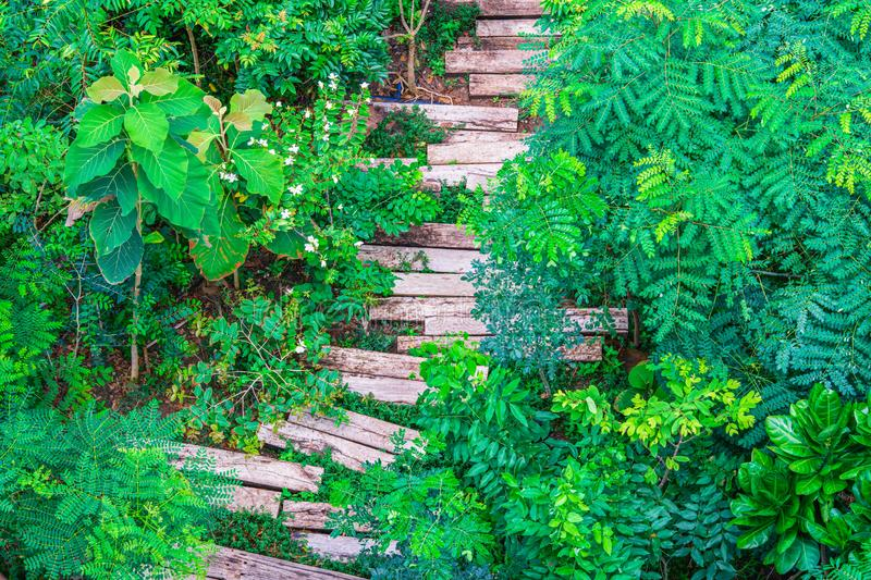 Tropical forsest with recycled wooden railway sleepers used to make the pathway in green garden, Top view stock image
