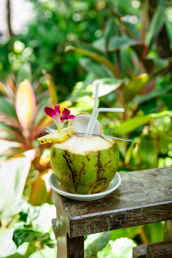 Tropical fresh cocktail in green coconut decorated pineapple and orchid flower against tropical foliage. Sunny day in tropical royalty free stock photography