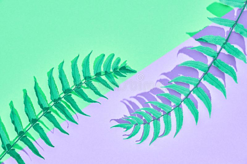 Tropical Fresh Fern Leaf. Summer. Minimal royalty free illustration