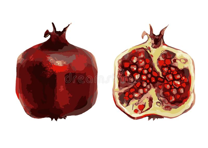 Hand drawn pomegranate. Watercolor painting on yellow background. royalty free illustration