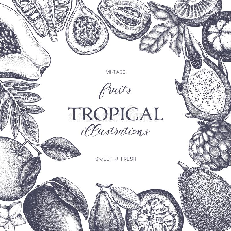 Vector card design with hand drawn tropical fruits illustration. Decorative inking background with vintage exotic plants sketch. S. Ketched template stock illustration