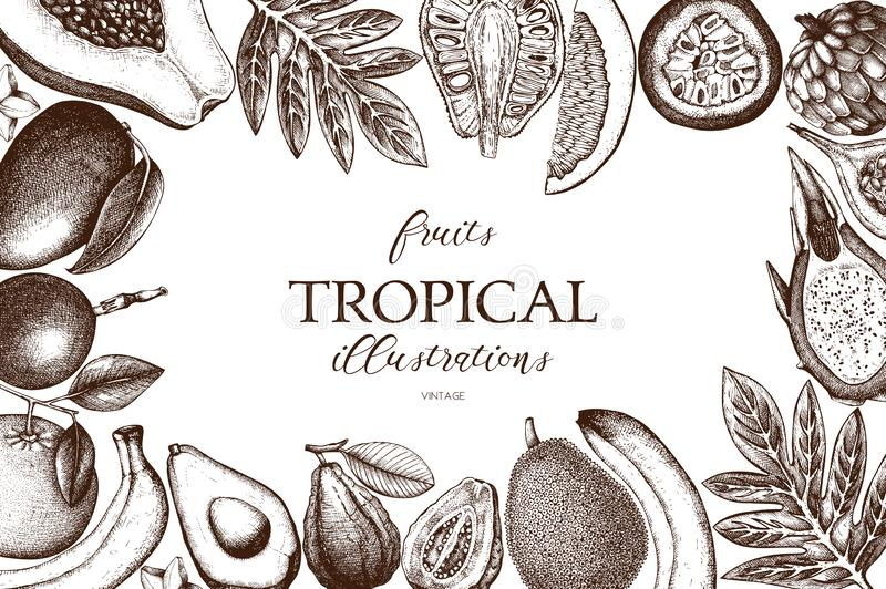 Vector card design with hand drawn tropical fruits illustration. Decorative inking background with vintage exotic plants sketch. S. Ketched template royalty free illustration