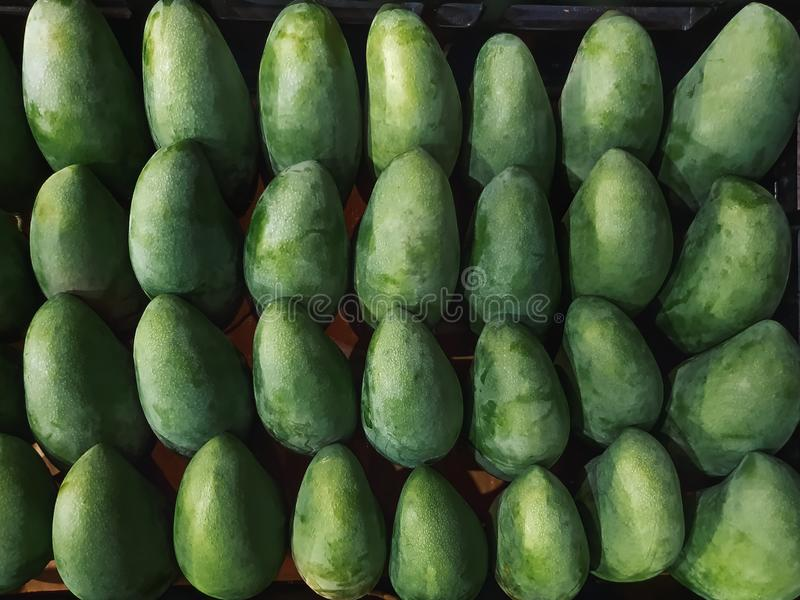 Full Frame Background of Bunch of Fresh Green Mangoes. royalty free stock images