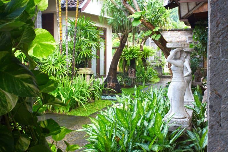 Tropical garden royalty free stock photos