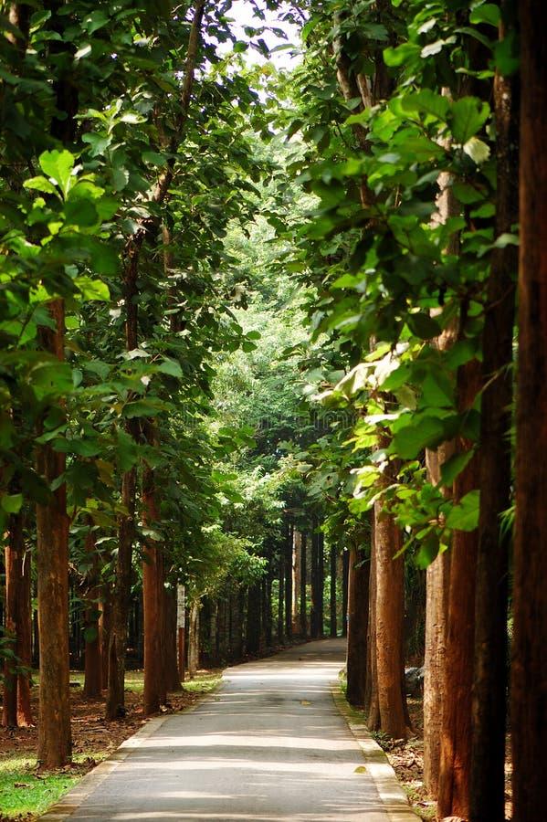 Free Tropical Garden Stock Photo - 6201350