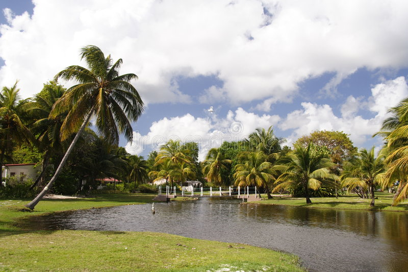 Download Tropical Garden stock image. Image of tropical, tropic - 833127
