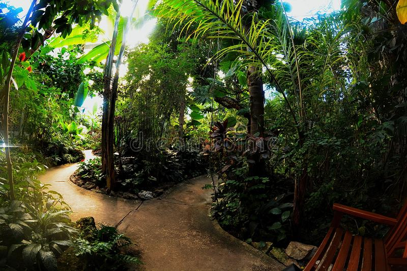 Tropical Garden conservatory interior stock photo
