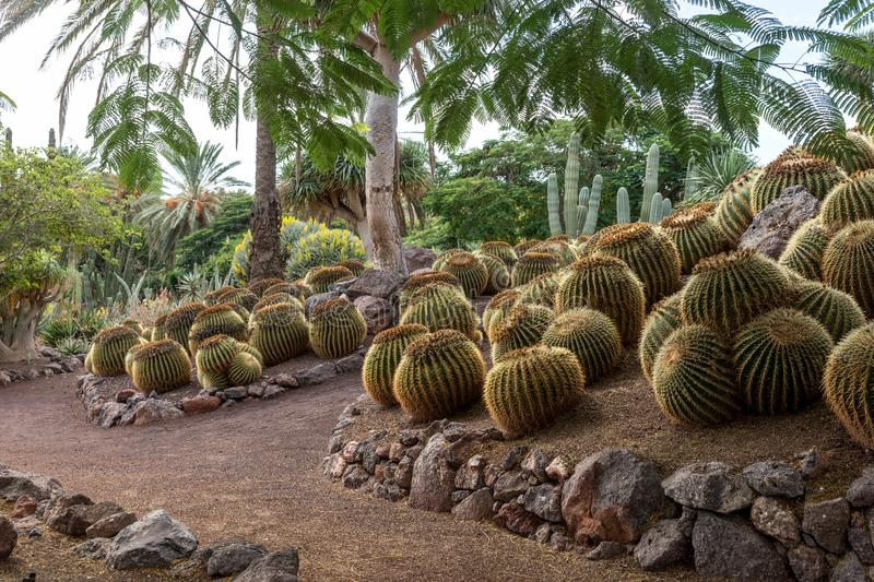 Tropical garden on Fuerteventura. Canary Island royalty free stock photography