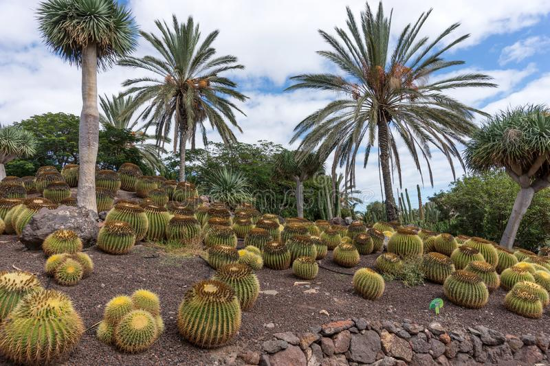 Tropical garden on Fuerteventura. Canary Island royalty free stock images