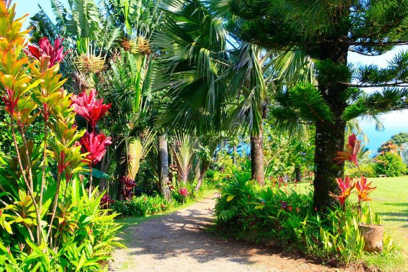 a tropical garden garden of eden maui hawaii stock. Black Bedroom Furniture Sets. Home Design Ideas