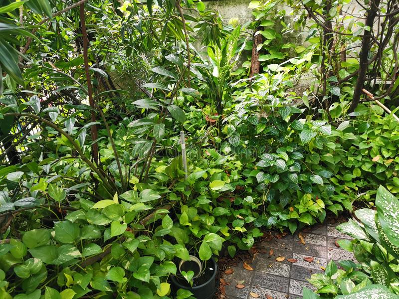 Tropical garden in the housing area, livng close to nature. Relaxing with ornamental plant royalty free stock photos