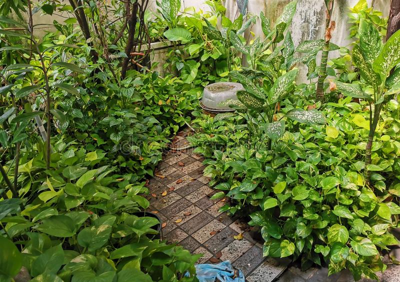Tropical garden in the housing area, livng close to nature. Relaxing with ornamental plant stock photos