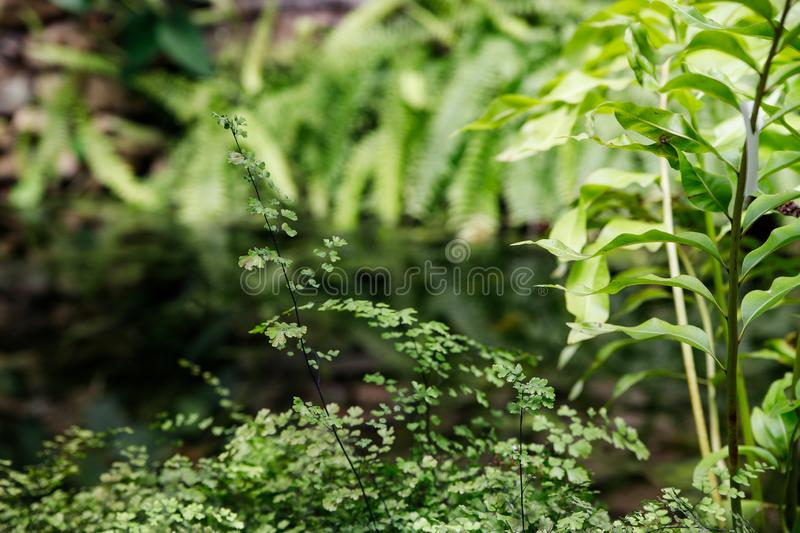 Tropical garden landscape. Fern leaves on the background of water. Tropical garden landscape. Green openwork leaves of fern on the background of water stock images